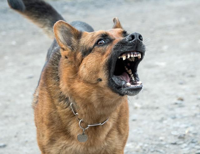 כלב נובח ללא הפסקה