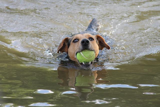 אילוף כלבים בחיפה